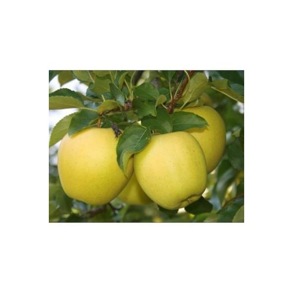 Organik Beyaz Elma 1 Kg