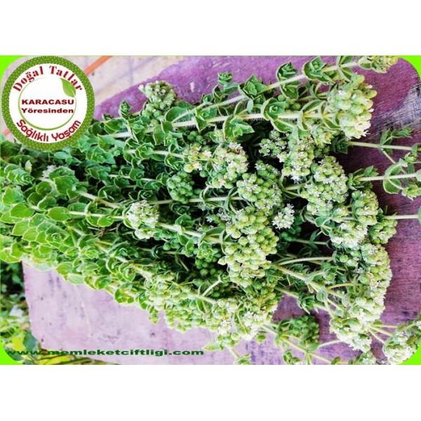 Organik Yeşil Kekik 1 Demet