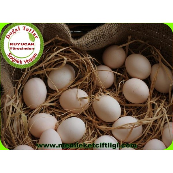 Köy Yumurtası 15 Tane