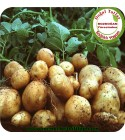 Patates(Aydın Bozdoğan Yöresi )
