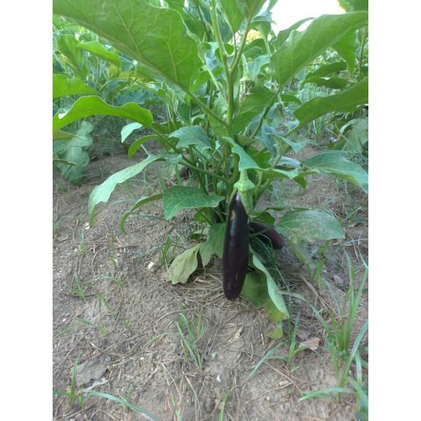 Doğal Köy  Bahçe Patlıcan 1 Kg