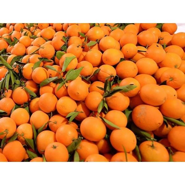 Sıkmalık Portakal 5 Kg