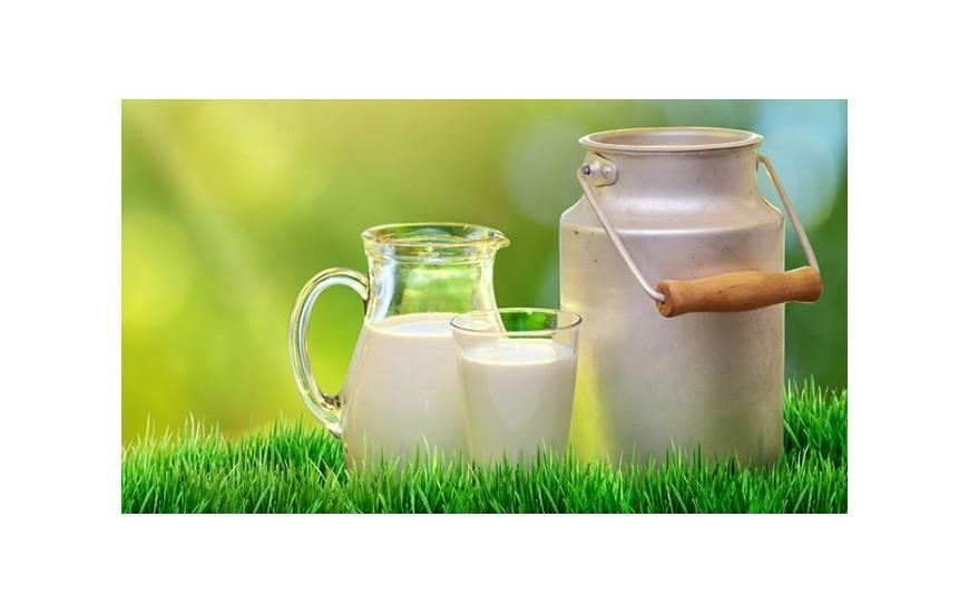 Günlük Süt