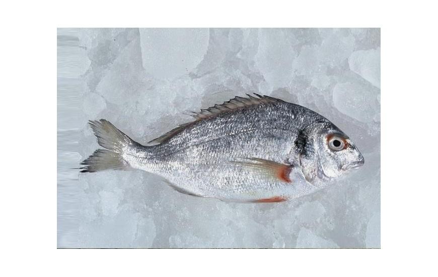 Havuz Balıkları (Kültür )