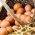 Kahvaltılık Yumurta