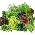Organik Otlar & Yeşillikler